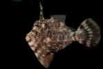 Blåsfiskartade fiskar